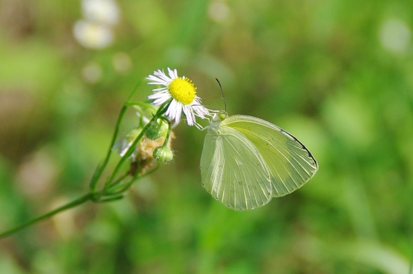 Butterfly-Zoom